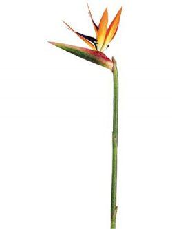 Gecter 6Pcs 31″ Large Artificial Elegant Bird of Paradise – Tropical Flower Bouquet  ...