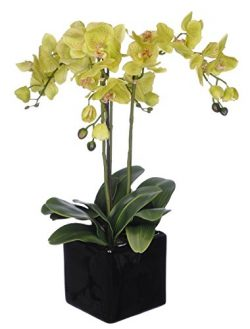 House of Silk Flowers Artificial Triple-Stem Phalaenopsis Orchid Arrangement, Lime Green