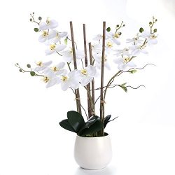 Livilan Large White Silk Orchid Artificial Flower Arrangements with Vase, Realistic Real Touch,  ...