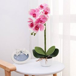 Livilan Silk Phalaenopsis Flower Arrangement, Artificial Orchid Flowers with White Vase, Wedding ...