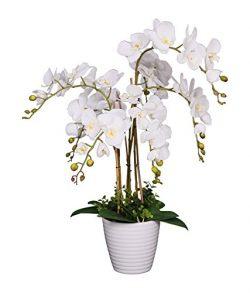 AMERIQUE AM3613OFWH25FT Unique and Gorgeous Orchid Artificial Silk Flower Plant, 2.5′, White