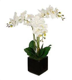 House of Silk Flowers Artificial White Triple Stem Orchid in Cube Vase (Black)