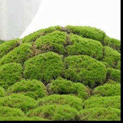 XHSP Artificial Grass Rug Fake Moss Grass Turf DIY Synthetic Turf Landscape Artificial Grass Mat ...