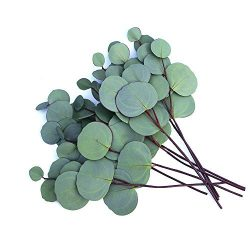 MaxFlowery 8 Stems Bunch Premium Faux Silver Dollar Eucalyptus with Thick Flat Leaves, Classic A ...