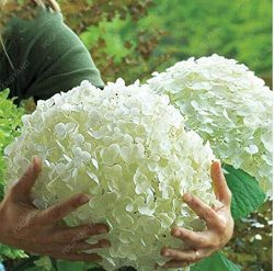 Hot Sale 30pcs White Hydrangea Artificial Silk Flower Wedding Festival Bouquet Home Living Room  ...