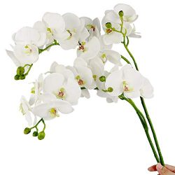 Rinlong 2pcs Silk Orchids White Orchid Artificial Flowers Real Touch Fake Phalaenopsis Cymbidium ...